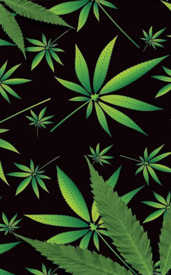 cannabis, sativa, май,