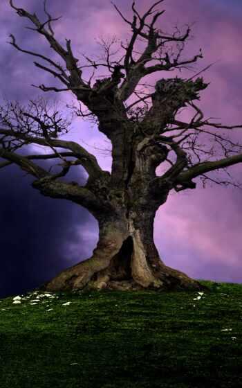 дерево, wikipediatree, definition, structure, использование, importance, fact, britannica