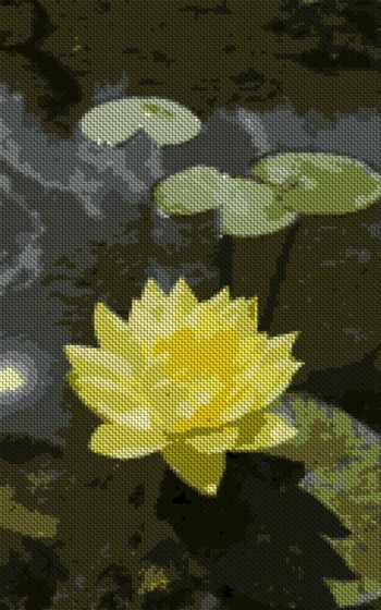 lotus, nucifera,