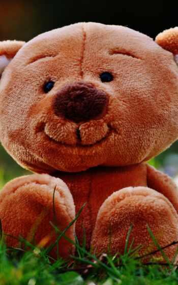 медведь, teddy