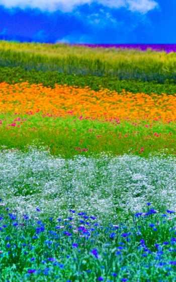 natural, landscape, landscaping,
