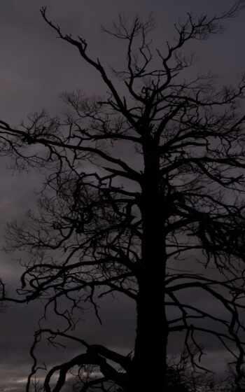 дерево, wikipediatree, datum, structure, википедия