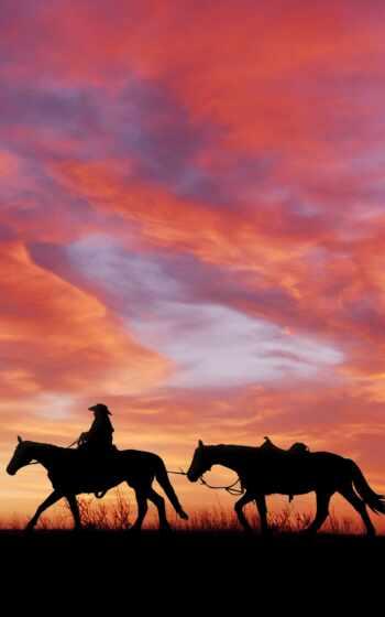 они, come, день, назад, никогда, stallion, covy