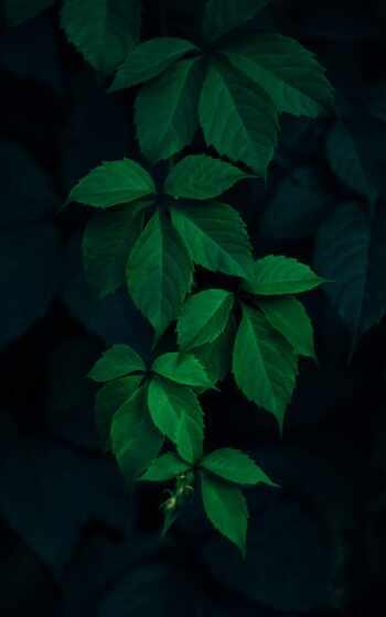 leaf, айфон, заставка, качество, поднос, фото, зарядка, fast, single
