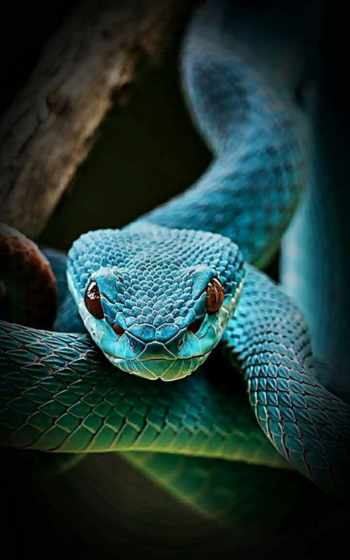 snake, diamond, hindi, краска,, zedge