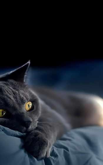 black, кот,