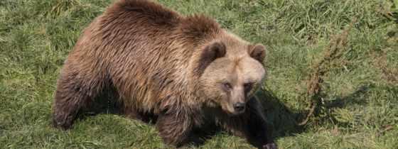 нояб, сочи, по, чп, пенсионерка, медведя, медведь, погибла, пенсионерку, eg,