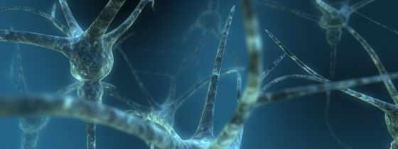 , нейроны, связи