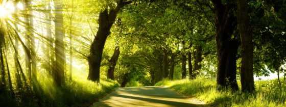 аллея, зелёная, красивые, зелёный, our, скачайте, старые,
