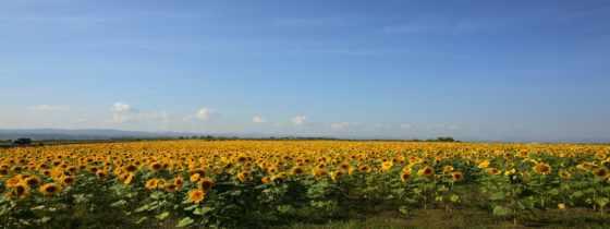 панорамные, пейзажи -, landscapes, панорамный, resimleri, flores,