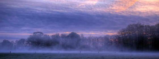 туман, full, красивые, погода, отражение, trees, дымка, утро,