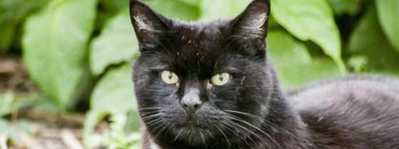 black, кот, телефон, mobile, глаза, ложь,