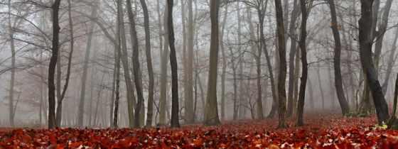осень, images, desktop, листва, free, htc, instagram,