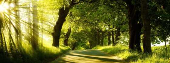 лес, дорога, лучи, dual, свет, заставки, об, desktop,