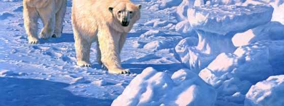 polar, art, медведь, bears, лед, seerey, lester, john, artist, along,
