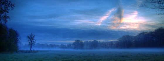 лес, туман, поле, рассвет, trees, browse, природа, раздолье, утро,