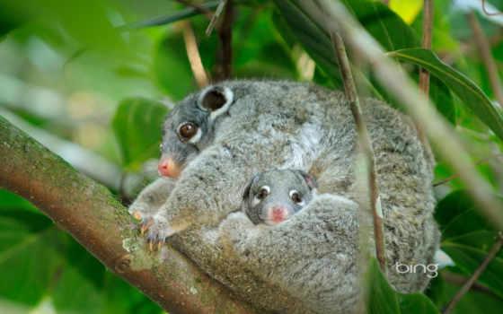 австралия, animals, you