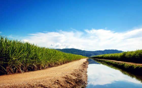 campos, caça, cielo, azúcar, gratis, pantalla, naturaleza, fondos, del, canal,