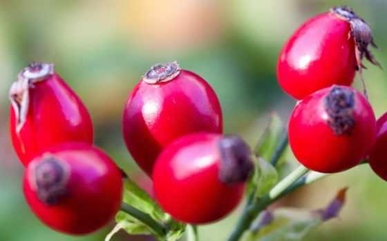 роза, rosier, sauvage, плод, hips, нефть, чая,