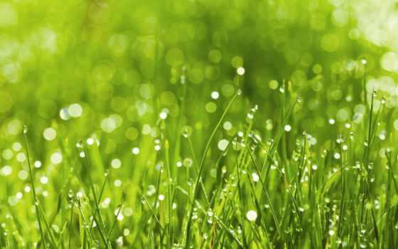трава, травы, скинали, cvety, фотопанно, стоит, овец, фотообои, пахнут, роса,