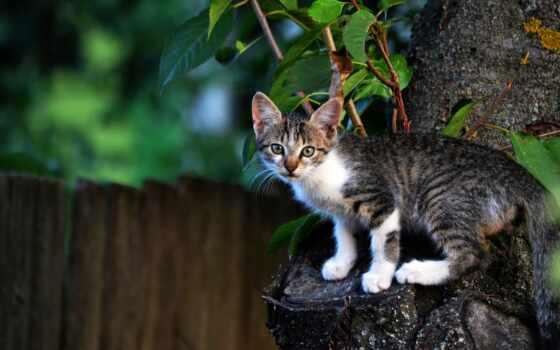 кот, nitroflare, mac, анимация, mockup, id, дерево, lifestyle, cobra, mixture