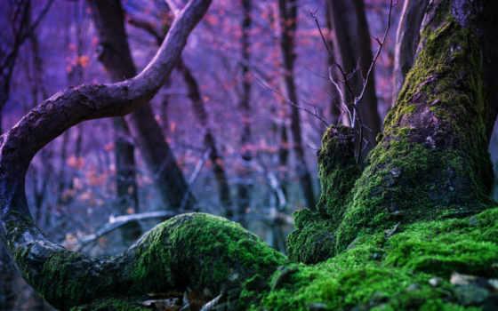 природа, мох