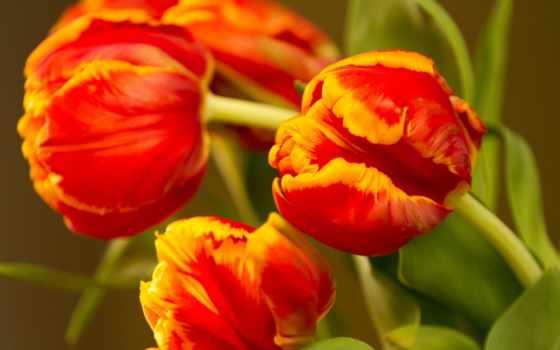 desktop, цветы, дневник