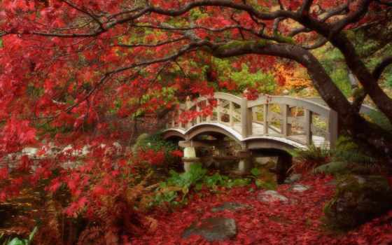japanese, garden, gardens