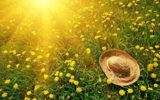 sun, трава, одуванчики, зелёный, природа, cvety, шляпа, yellow,
