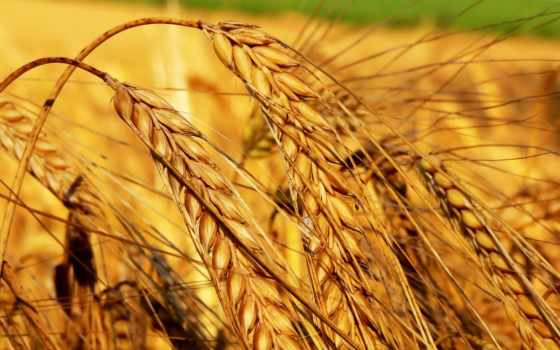 символ, богатства, shui, долголетия, символы, фен, банка, лань, пшеница,