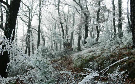 природа, природы, качестве, лес, высоком, gif, качества, collector, фотографий,