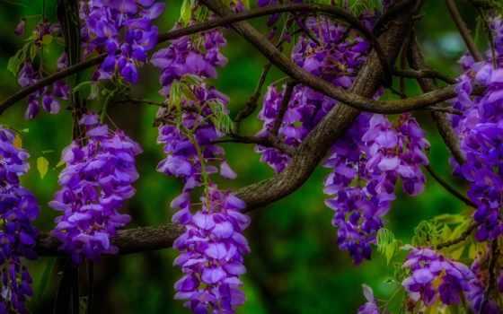 цветущего, дерева, fone, разрешениях, branch, разных, cvety,
