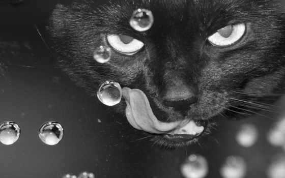 кошки, белые, глазами
