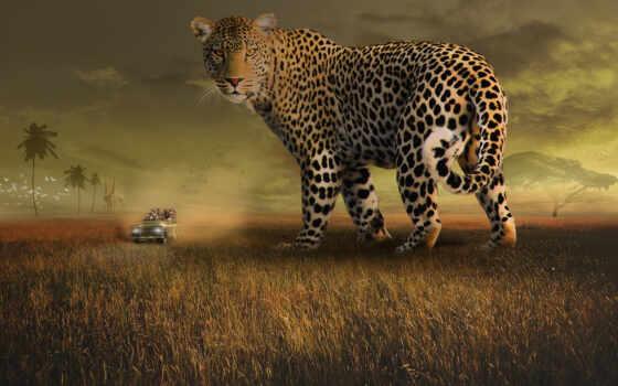 сафари, леопард, landscape, animal, прокатиться, tourist, животные