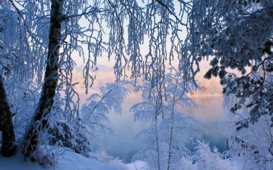 winter, лес, иней, снег, дерево