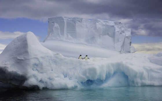 лед, arctic, polar, пингвин, animal, шапка, медведь, iceberg, water, air, море