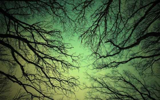 деревья, небо, природа, nik, rus, туман, зеленого, фоне, ветви, холмы, деревьев, неба, tree,