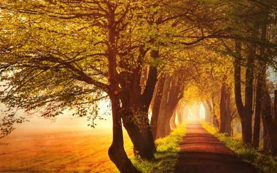 аллея, деревья, осень