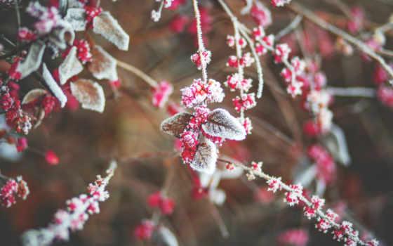 хороший, утро, images, flowers, розовый, pinterest, изображение, об, save,