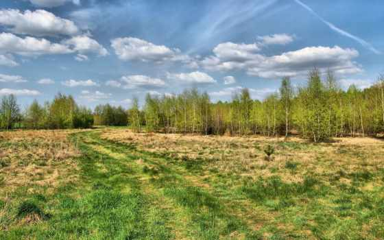 country, дорога, trees, трава, summer, wood, небо, desktop,