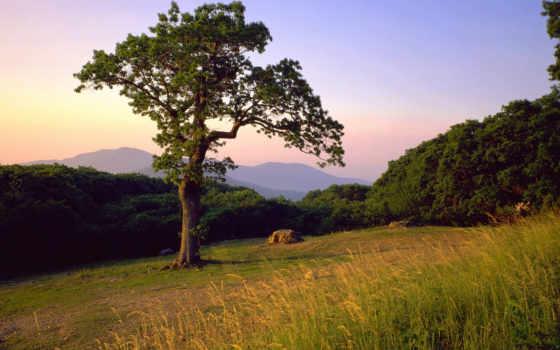 дерево, поляне, леса, летней, склоне, одинокое, summer, hill, банка, boulder,