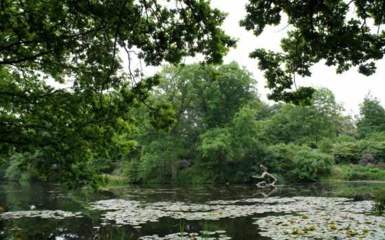 природа, кувшинки, пруд, озеро, trees, цветы, небо, robin, дек, лес, изображения,