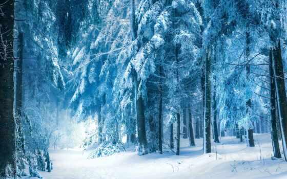 halioua, robin, white, dreaming, christmas, deviantart, winter, атлантис, лес,