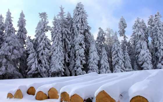 fondo, escritorio, pantalla, nieve, invierno, bosque, голова, fondos, del, nevado,