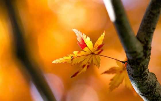 осень, thl, природа,