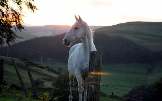 природа, лошадь, планшетный, лошади, закат, забор, browse, apple, iphone, zhivotnye,