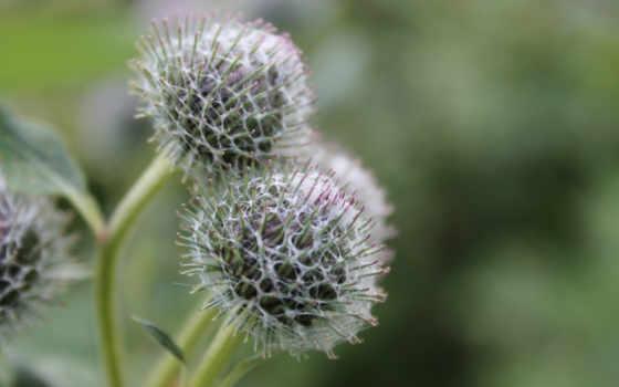 burç, макро, images, растения, качество, high,