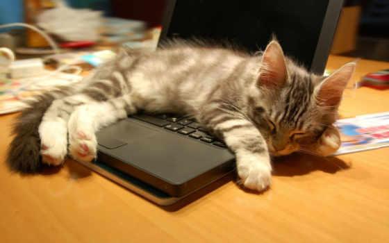 кот, кошки, хозяйстве