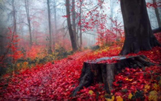 лес, осень, листва, martha, landscape, телефон, планшетный, ноутбук