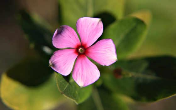 Цветы 2251